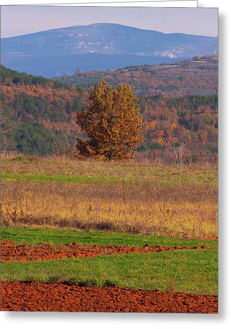 Terra Istria Greeting Card