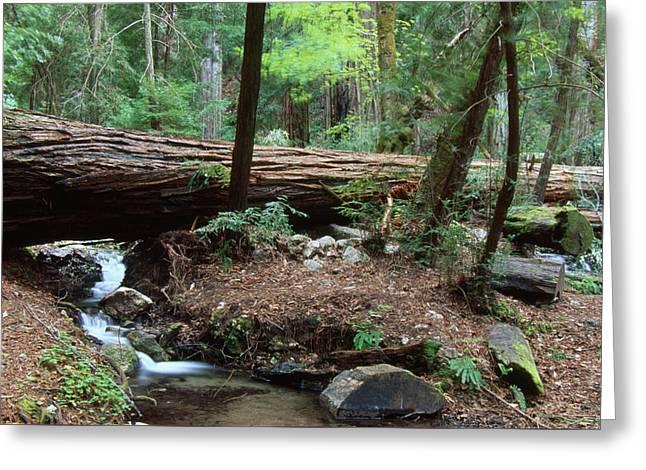 Terrace Creek - Ventana Wilderness Greeting Card