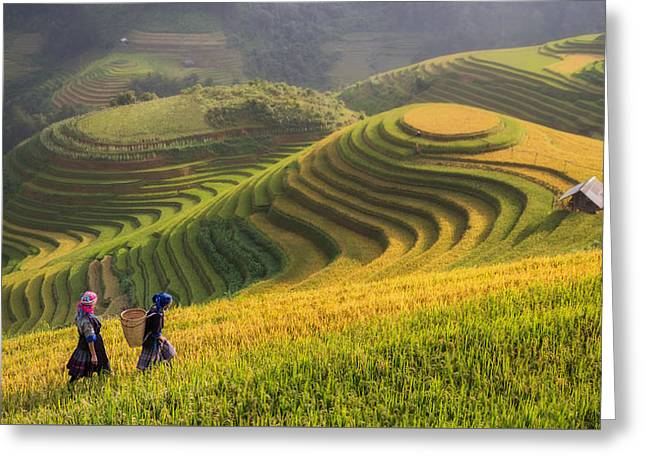 Terraced Rice Field Inside Fog And Morning Ray In Mu Cang Chai, Greeting Card by Anek Suwannaphoom
