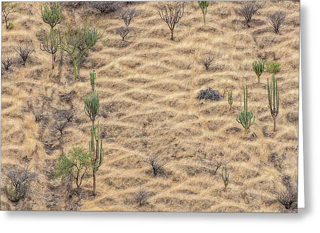 Greeting Card featuring the photograph Terraced Slope by Britt Runyon