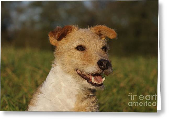 Terrier Mix Greeting Card