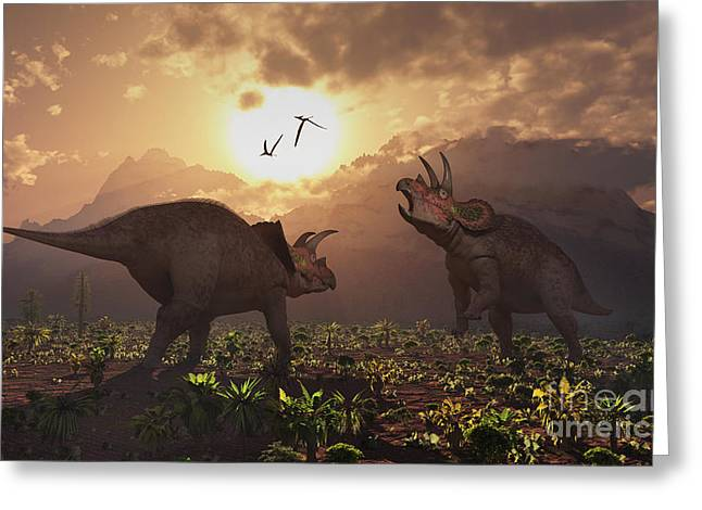Territorial Confrontation Between Two Greeting Card by Mark Stevenson