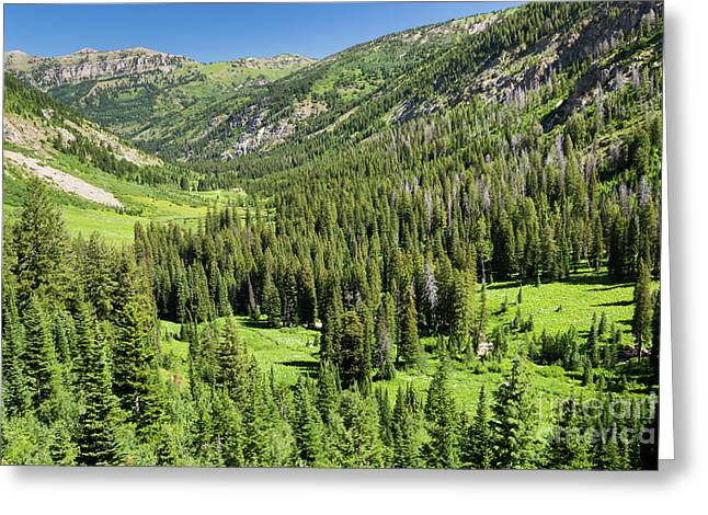 Teton Canyon Greeting Card