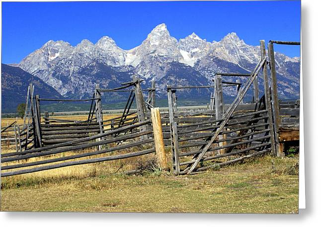 Teton Corral 2 Greeting Card by Marty Koch