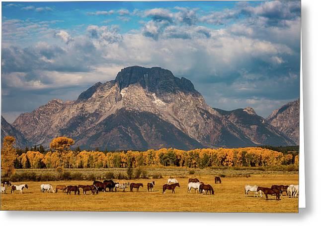 Teton Horse Ranch Greeting Card by Darren White