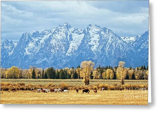 Teton Horses Greeting Card by Carolyn Fox
