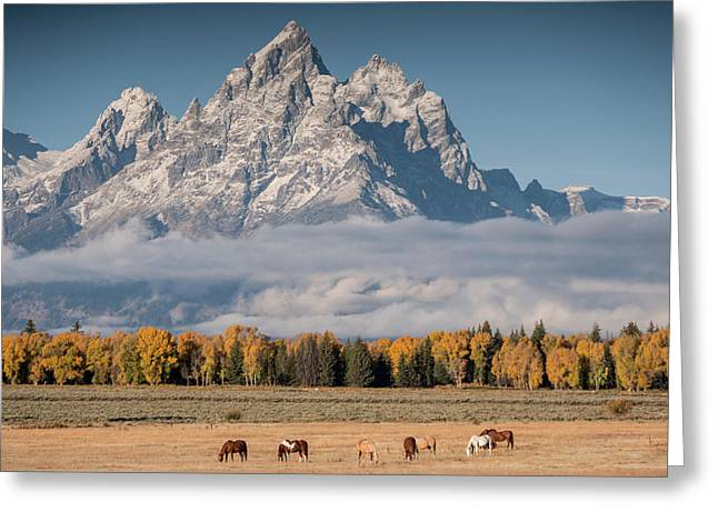 Teton Horses Greeting Card