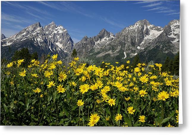 Teton Spring Greeting Card