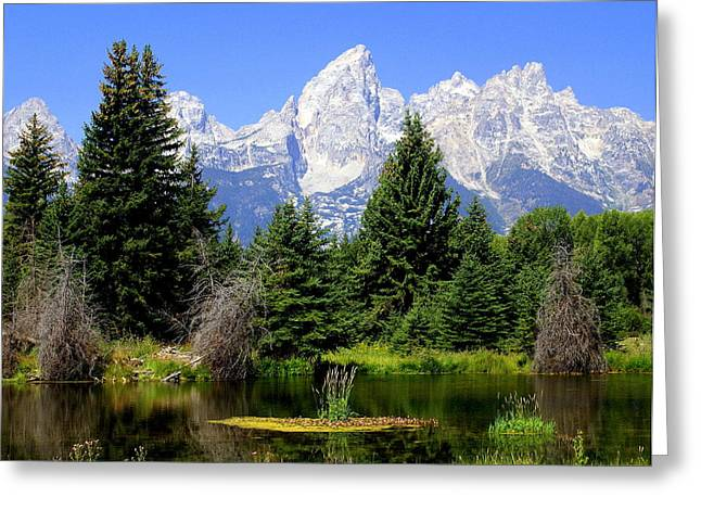 Tetons Greeting Card by Marty Koch