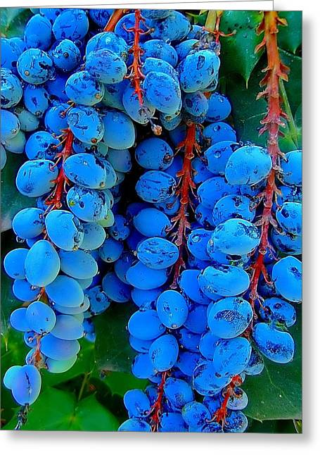 Blue Grapes Photographs Greeting Cards - Texas Berries Greeting Card by Beth Akerman