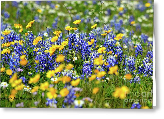 Texas Blue Bonnet  Greeting Card
