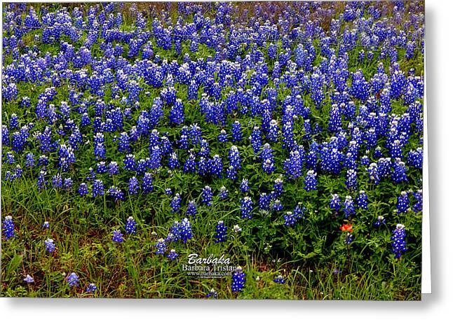 Texas Bluebonnets #0484 Greeting Card