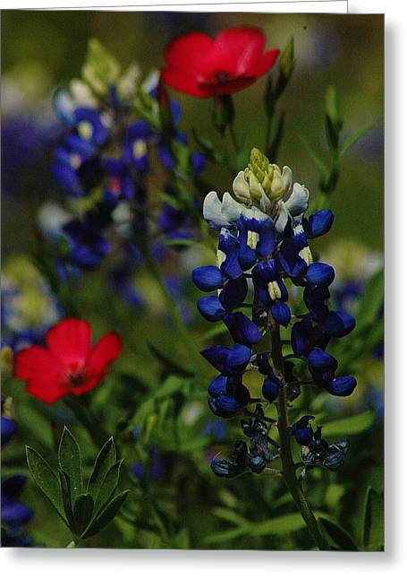 Texas Blue Bonnett Greeting Card