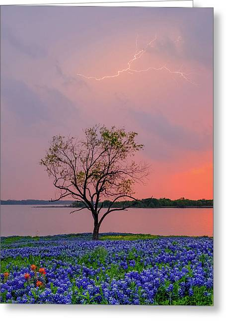 Texas Bluebonnets And Lightning Greeting Card