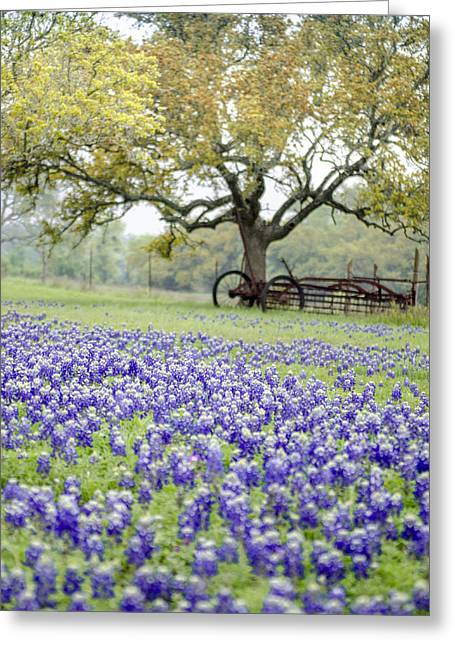 Texas Bluebonnets And Rust Greeting Card by Debbie Karnes