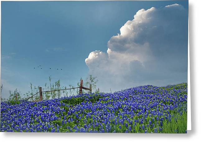Greeting Card featuring the photograph Texas Bluebonnets And Spring Showers by David and Carol Kelly