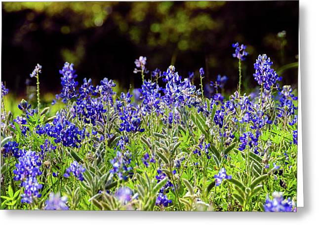 Texas Bluebonnets IIi Greeting Card by Greg Reed