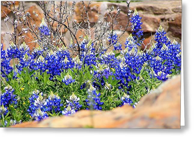 Texas Bluebonnets Greeting Card by Sherwanda Irvin