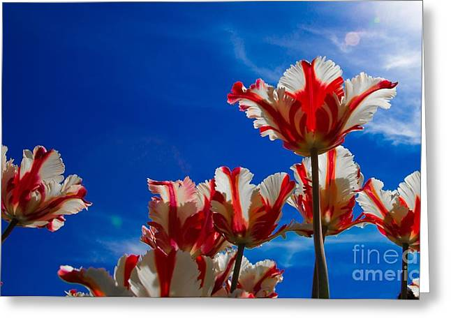 Texas Flames Reaching For The Sun Greeting Card by John Roberts