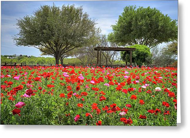Texas Hill Country Poppies Greeting Card by Lynn Bauer