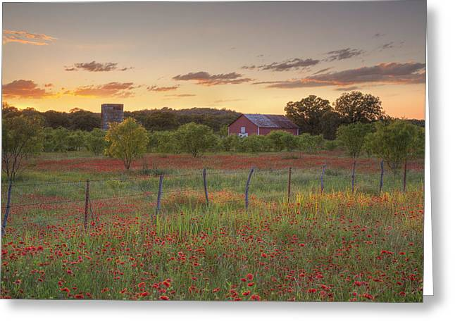 Texas Hill Country Wildflowers At Sunset 3 Greeting Card by Rob Greebon
