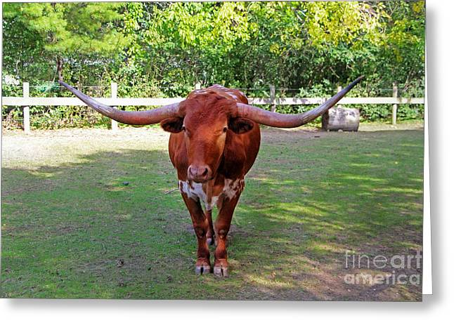 Texas Longhorn Greeting Card by Nishanth Gopinathan