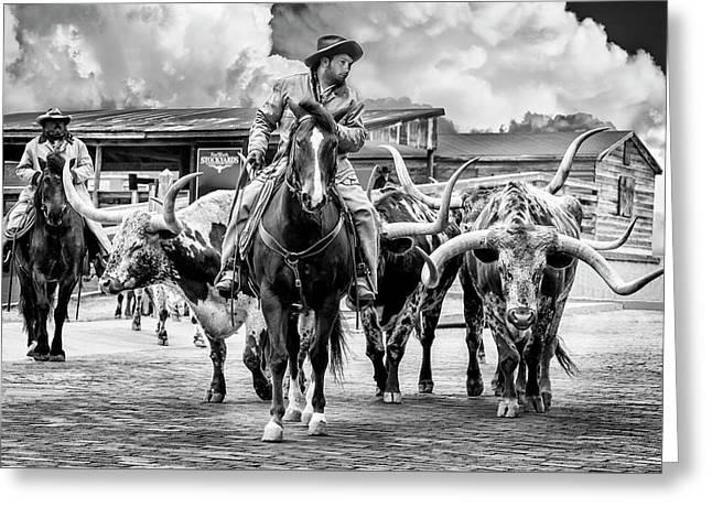 Texas Longhorns Greeting Card by Kelley King
