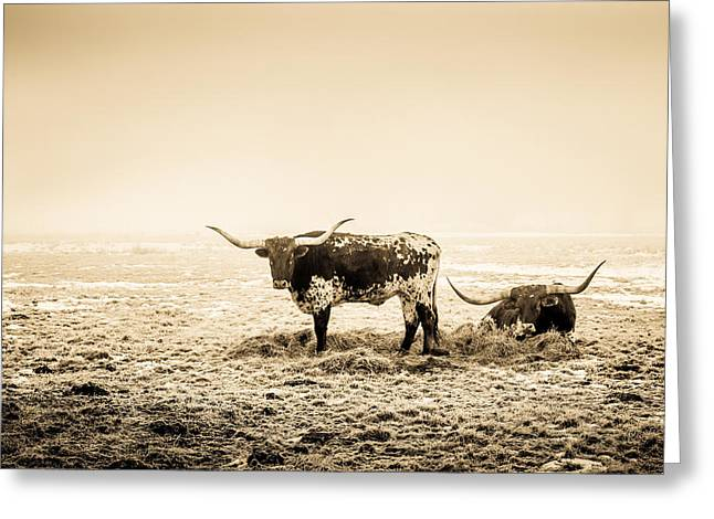 Texas Longhorns Greeting Card