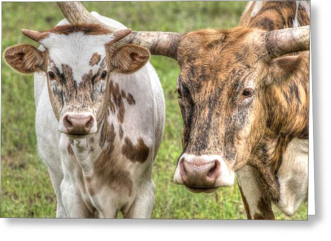 Longhorn Mother And Son Greeting Card