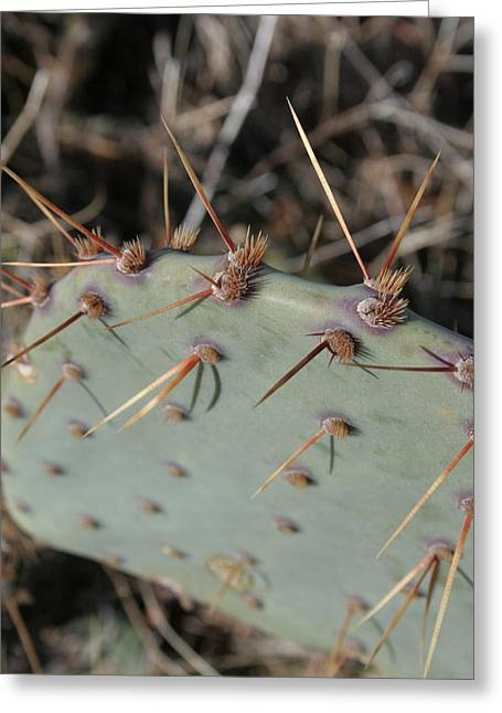 Greeting Card featuring the photograph Texas Spikes by Laddie Halupa