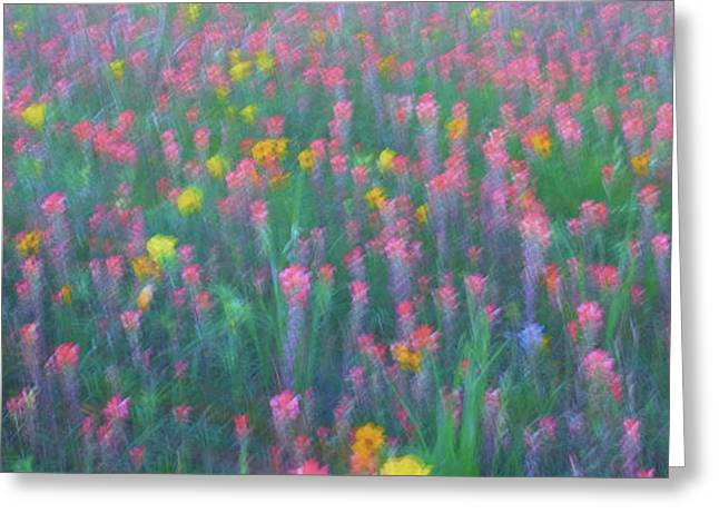 Texas Wildflowers Abstract Greeting Card