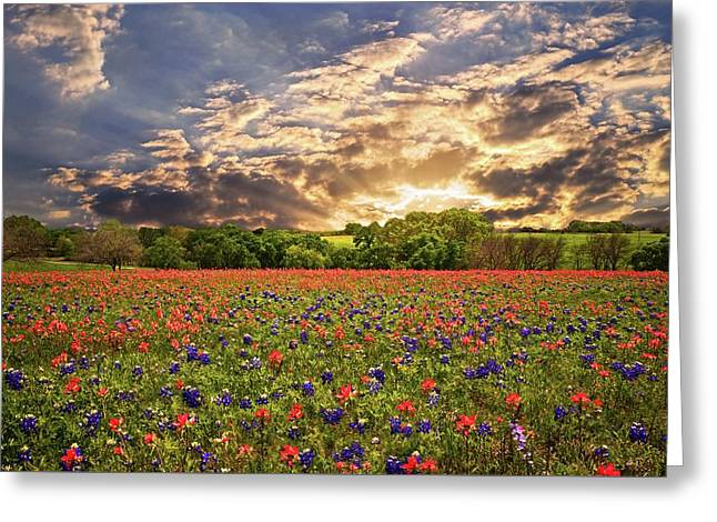 Texas Wildflowers Under Sunset Skies Greeting Card