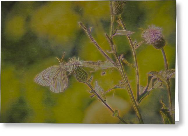 Textured Butterfly 1   Greeting Card by Leif Sohlman