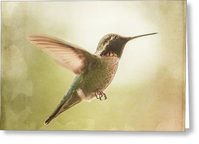 Hummingbird In Flight - Textured Greeting Card