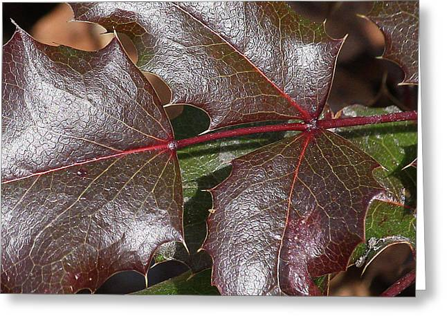 Greeting Card featuring the photograph Textured Leaves by Doris Potter