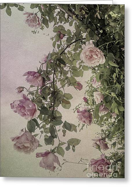 Textured Roses Greeting Card