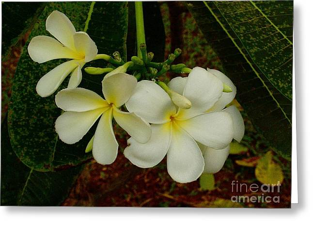 Thai Flowers II Greeting Card by Louise Fahy