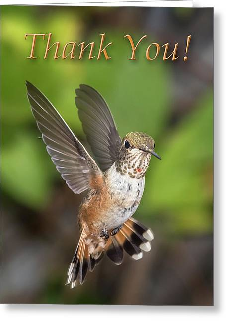 Thank You - Female Rufous Hummingbird  Greeting Card