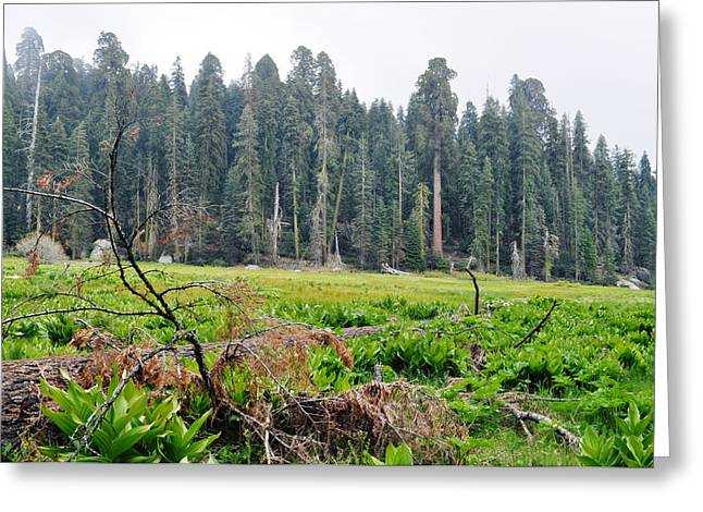 Greeting Card featuring the photograph Tharps Log Meadow by Kyle Hanson