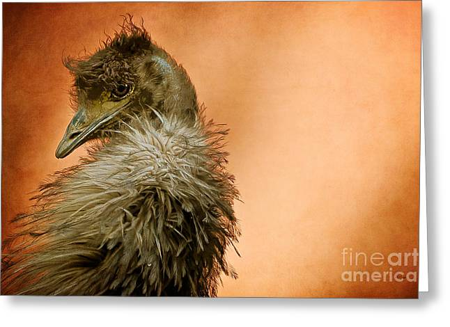 Emu Greeting Cards - That Shy Come-Hither Stare Greeting Card by Lois Bryan