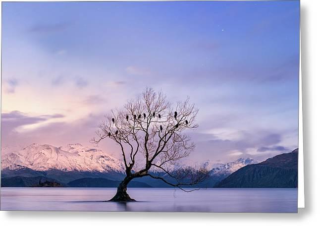 That Wanaka Tree Greeting Card