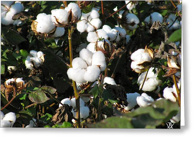 Thats A Cotton Boll Greeting Card by Debra     Vatalaro