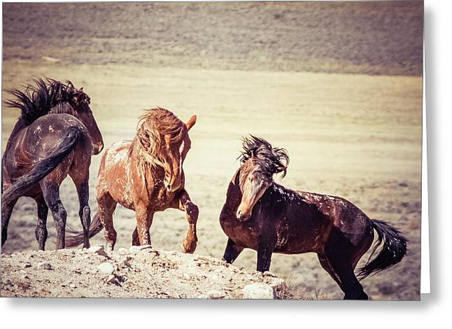 The 3 Amigos Greeting Card by Mary Hone