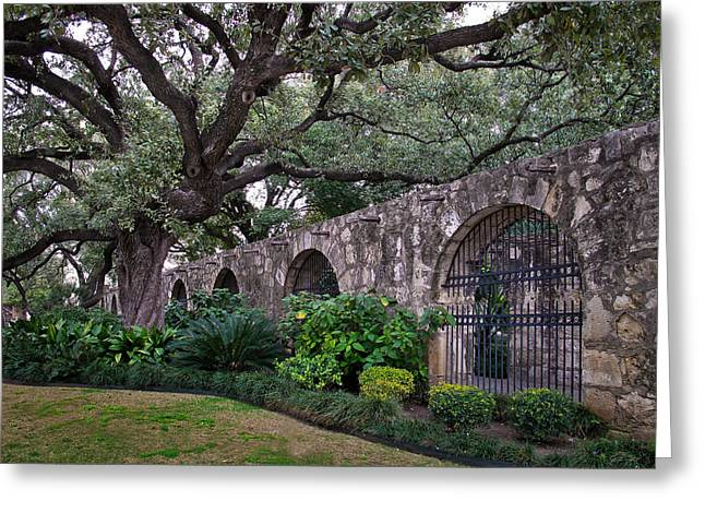The Alamo Oak Greeting Card by David and Carol Kelly