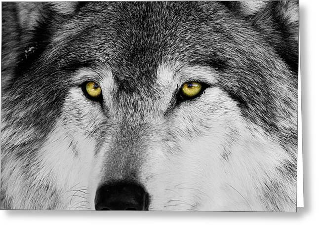 The Alpha Portrait Greeting Card by Mircea Costina Photography
