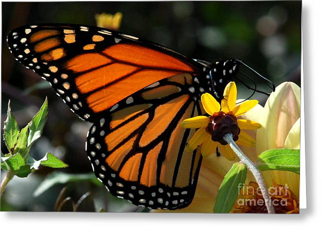 The American Monarch Greeting Card by Terri Creasy