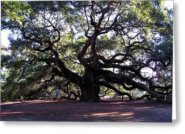 1400 Greeting Cards - The Angel Oak in Charleston SC Greeting Card by Susanne Van Hulst