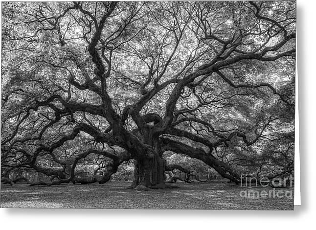 The Angel Oak Tree Bw  Greeting Card