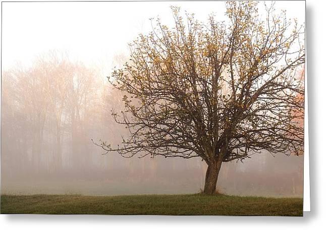 The Apple Tree Greeting Card