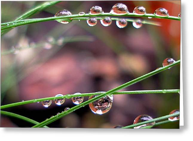 The Art Of Dew Drops Greeting Card